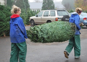 Jtb U Cut Christmas Trees Gresham Oregon Frequently Asked Questions